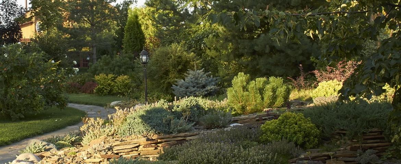 Хвойные в саду